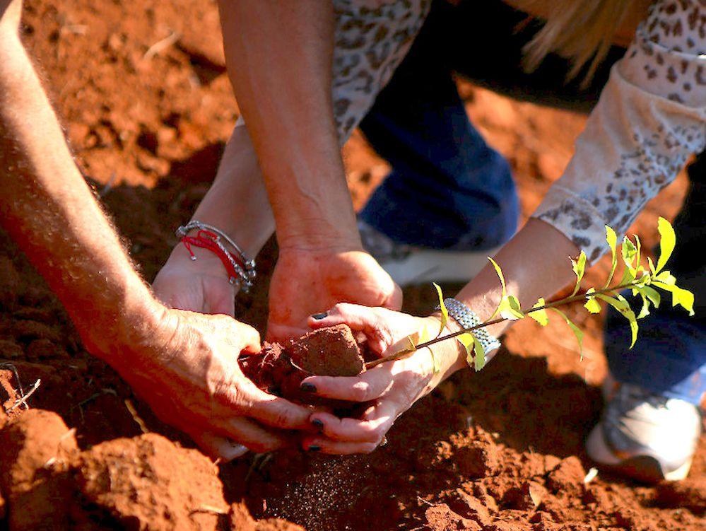 Morombí: Plantaron 70 mil plantines de especies nativas