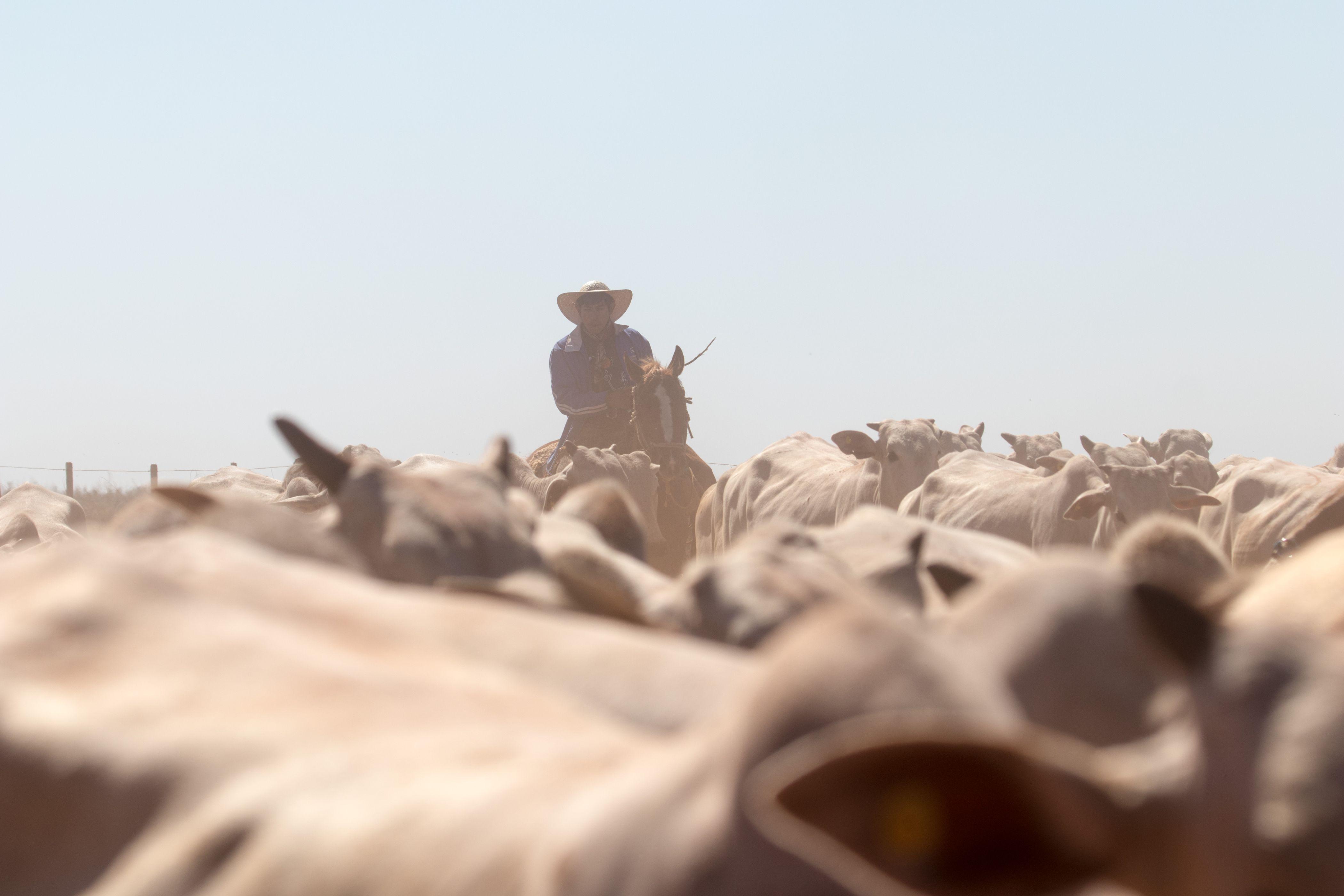 Campos Morombi: 50 años brindando calidad en el rubro agroganadero y forestal en el país